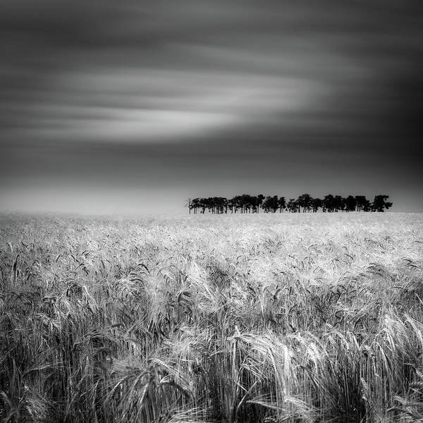 Wheat Wall Art - Photograph - Tierra De Pan by Marco Antonio Cobo