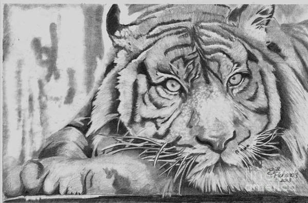 Drawing - Tiger by Bill Richards