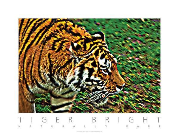 Photograph - Tiger Bright  Naturally Rare Poster by David Davies