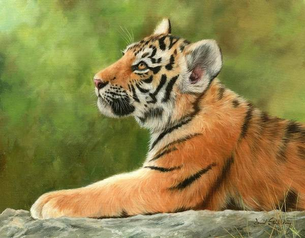 Bengal Tiger Painting - Tiger Cub by David Stribbling