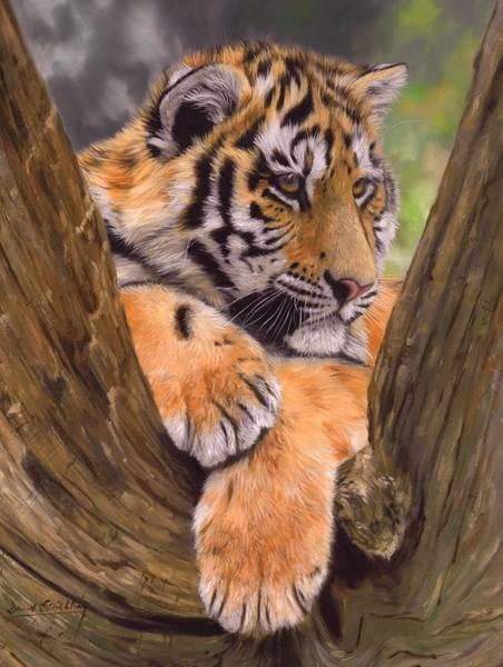 Siberian Tiger Wall Art - Painting - Tiger Cub Painting by David Stribbling