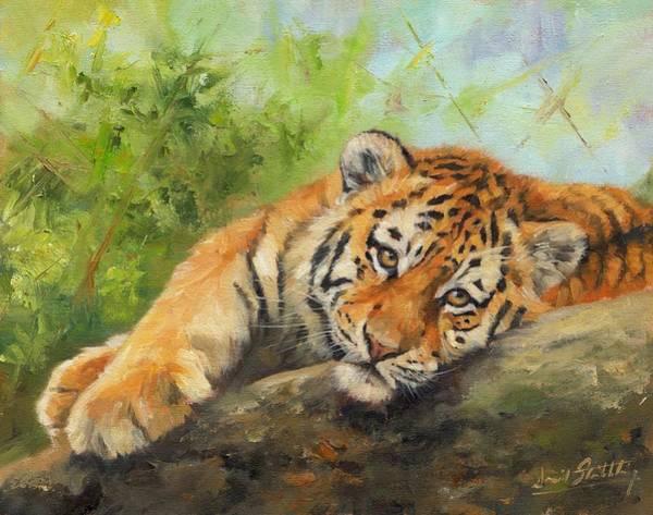 Siberian Tiger Wall Art - Painting - Tiger Cub Resting by David Stribbling