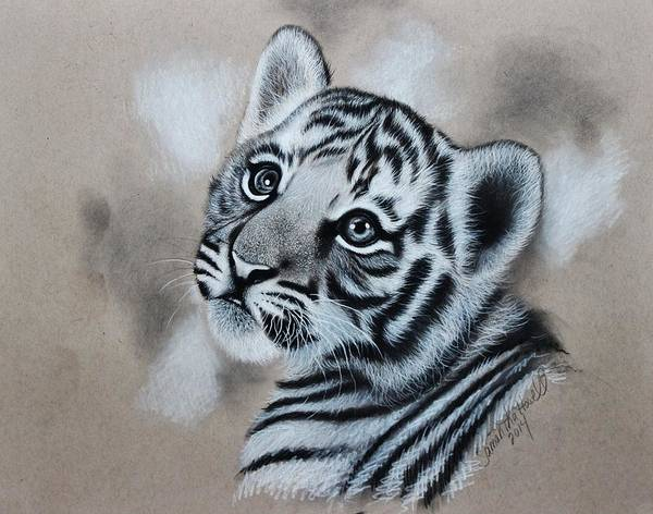 White Tiger Drawing - Tiger Cub by Samantha Howell