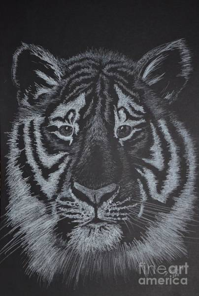 White Tiger Drawing - Tiger by David Swope
