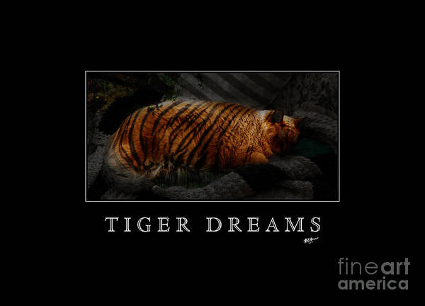 Photograph - Tiger Dreams Poster by Kathi Shotwell