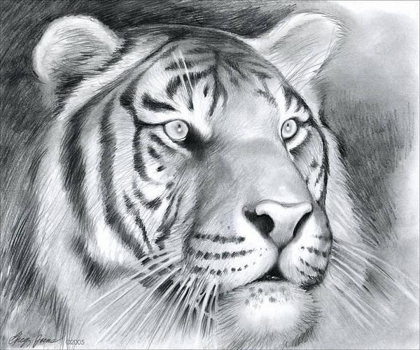 Tigers Wall Art - Drawing - Tiger by Greg Joens
