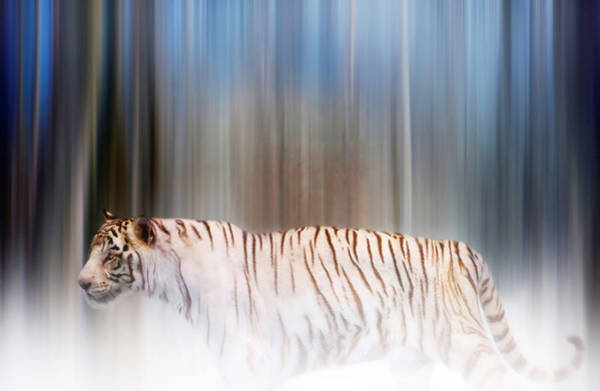 Tiger In The Mist Art Print