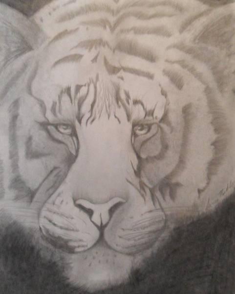 Bengal Tiger Drawing - Tiger by Jamie Nickels