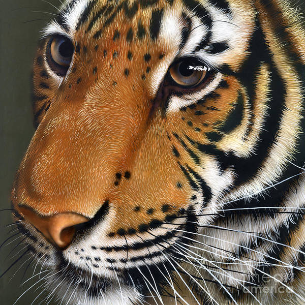 Wall Art - Painting - Tiger by Jurek Zamoyski