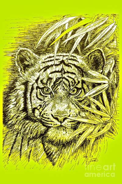 Bengal Tiger Drawing - Tiger - King Of The Jungle by Gitta Glaeser
