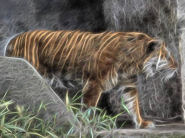 Painting - Tiger Light by Jon Volden