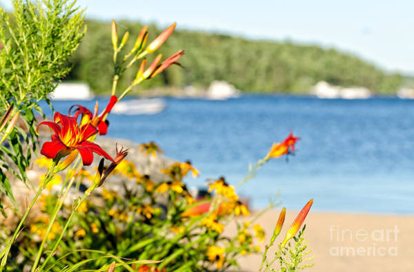 Photograph - Tiger Lily At The Beach by Les Palenik
