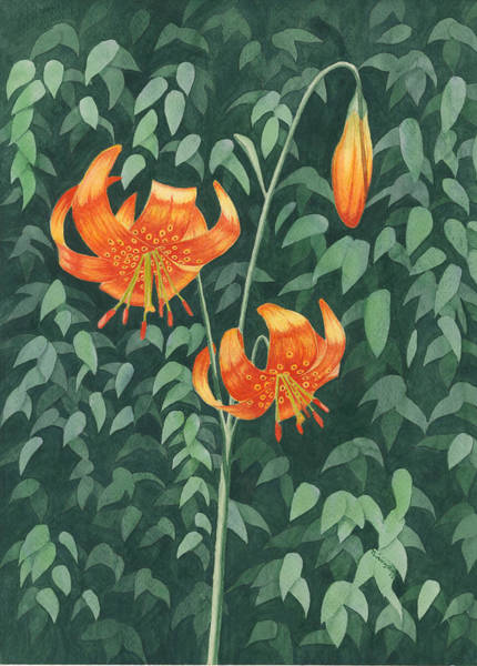 Wall Art - Painting - Tiger Lily by Timothy Livingston