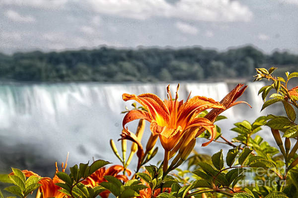 Photograph - Tiger Lily With A Blurred Falls by Jim Lepard