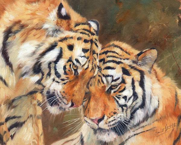 Big Cat Wall Art - Painting - Tiger Love by David Stribbling