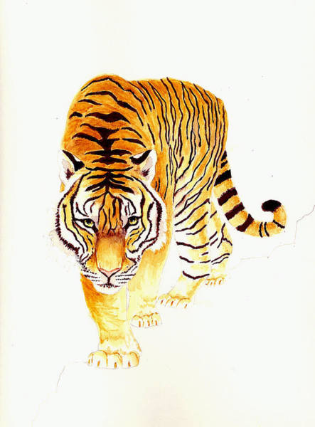 Wall Art - Painting - Tiger by Michael Vigliotti