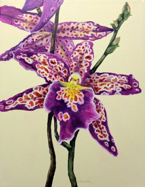 Painting - Tiger Orchid by Mary Palmer
