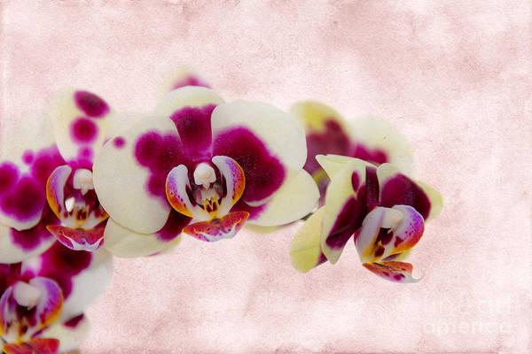 Purple Rain Digital Art - Tiger Orchid by Svetlana Sewell