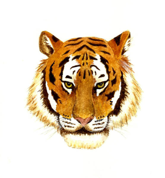 Wall Art - Painting - Tiger Portrait by Michael Vigliotti