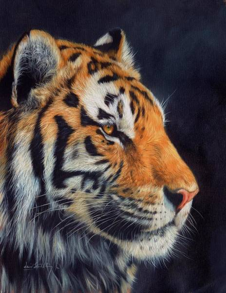 Bengal Tiger Painting - Tiger Profile by David Stribbling