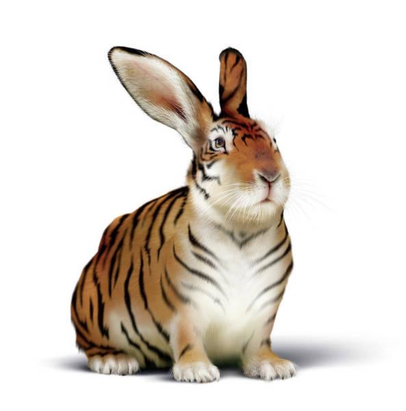 Hybrid Photograph - Tiger-rabbit by Smetek/science Photo Library