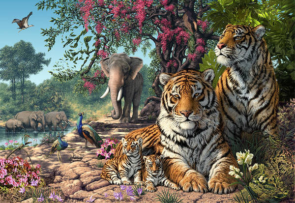 Bengals Photograph - Tiger Sanctuary by MGL Meiklejohn Graphics Licensing
