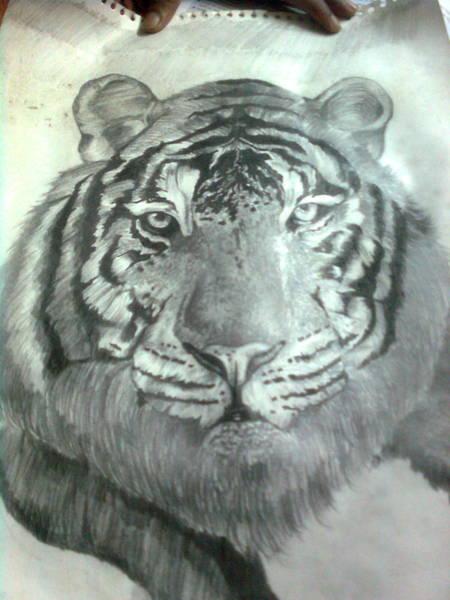 Bengal Tiger Drawing - Tiger - Shailendra by Jagdish Jaiswara