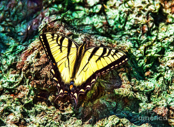 Photograph - Tiger Swallowtail Butterfly by Jim Lepard
