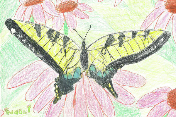 Drawing - Tiger Swallowtail Resting by Fred Hanna