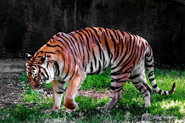 Tiger Tale Art Print