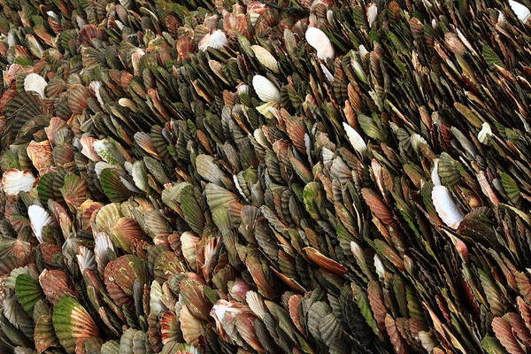 Photograph - Tightly Packed Seashells by Aidan Moran