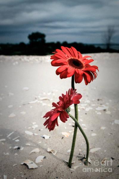 Photograph - Till Death Do Us Part by Gary Heller