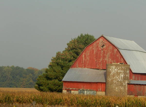 Photograph - Tilted Barn by Wild Thing