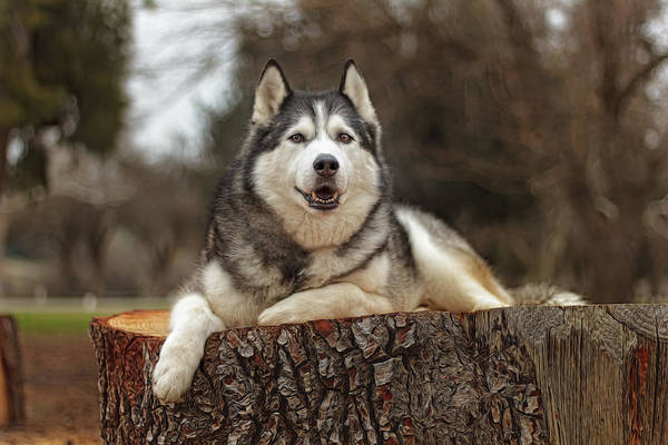 Photograph - Timber by Brian Cross