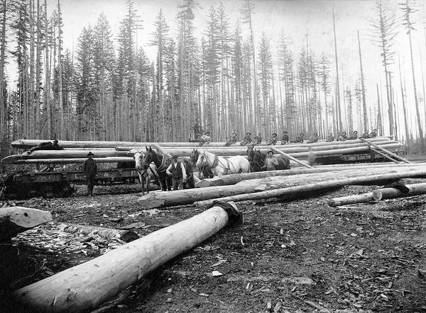 Trailer Photograph - Timber Logging by Library Of Congress/science Photo Library