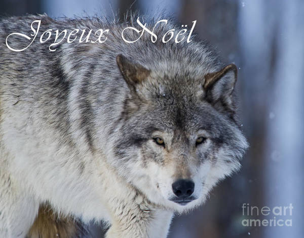 Photograph - Timber Wolf Christmas Card French 18 by Wolves Only