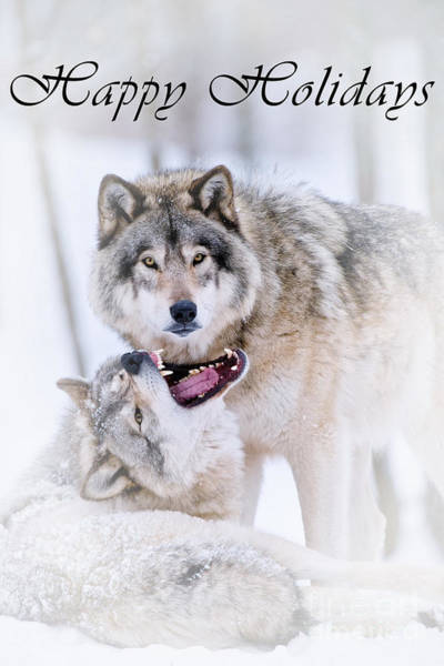 Photograph - Timber Wolf Holiday Card 16 by Wolves Only