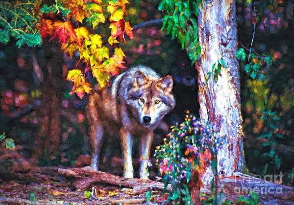 Photograph - Timber Wolf In Fall by Les Palenik