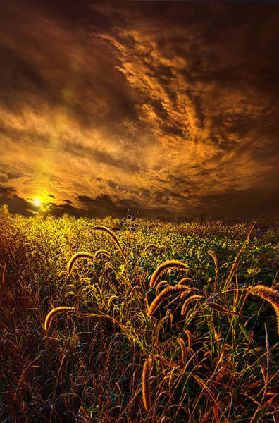 Photograph - Time Everlasting by Phil Koch