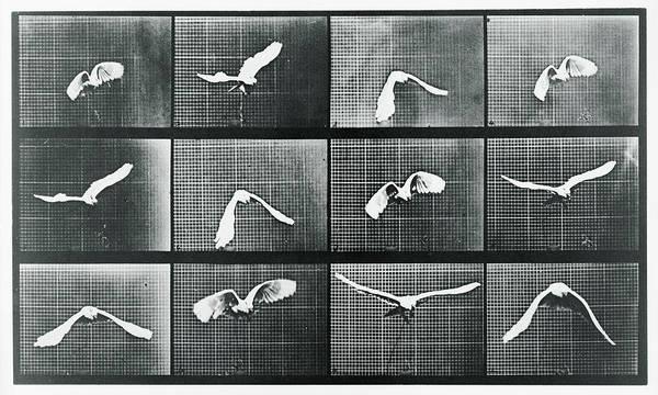 Mixed Media - Time Lapse Motion Study Bird Monochrome  by Tony Rubino