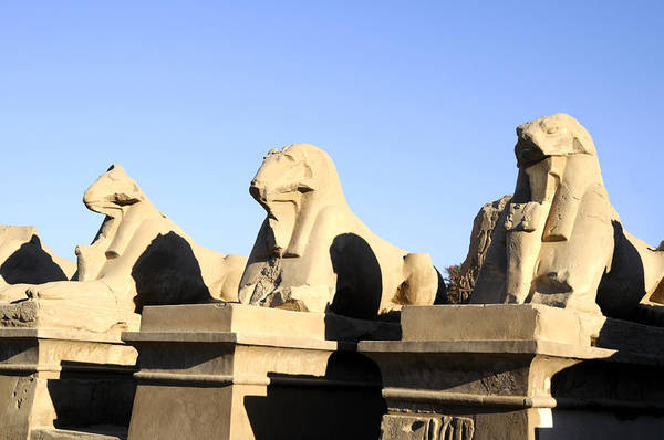 Photograph - Time Reduces The Magestic Sphinx by Brenda Kean