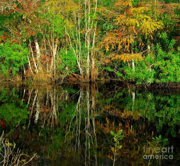 Photograph - Time To Reflect by Anthony Wilkening