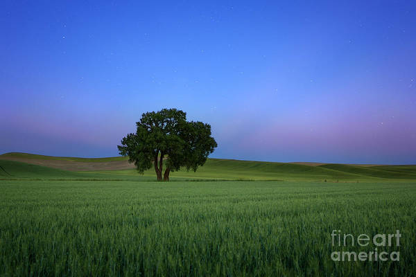 Photograph - Timeless Evening by Beve Brown-Clark Photography