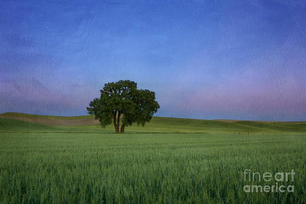 Photograph - Timeless by Beve Brown-Clark Photography
