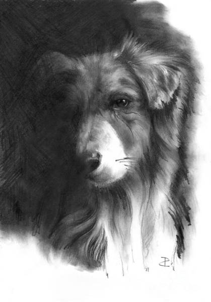 Mutt Drawing - Timmy by Paul Davenport