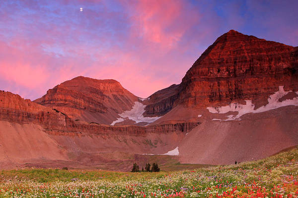 Alpine Meadows Photograph - Timpanooke Meadow Sunset by Johnny Adolphson