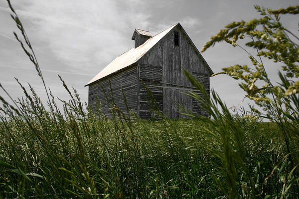 Photograph - Tin Roof Crib by Dylan Punke