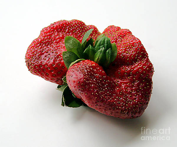 Photograph - Tina's Strawberry by PJ Boylan