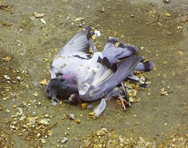 Photograph - Tiny Death On Mandeville Street by Louis Maistros