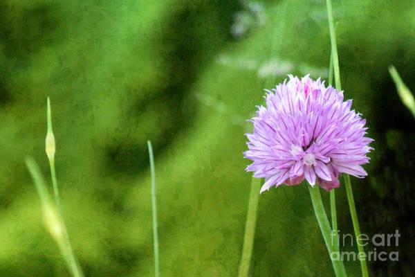 Compose Wall Art - Photograph - Tiny Flower by Lutz Baar